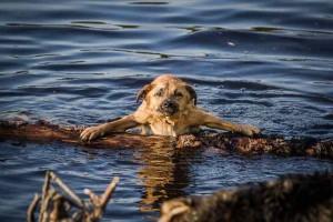 Hund Planschen Wasser