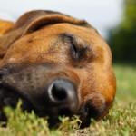 hund-schlafen