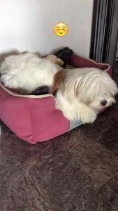 Mina im neuen Zuhause