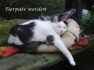 Tierpate werden. Mit einer Tierpatenschaft die Versorgung von Sorgenkatzen sichern.