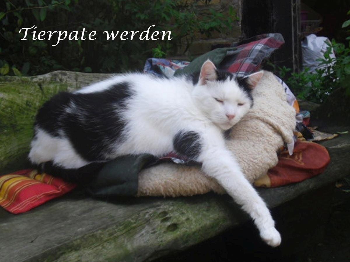 Informieren Sie sich über eine Tierpatenschaft