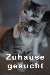 Süße Katzen abzugeben
