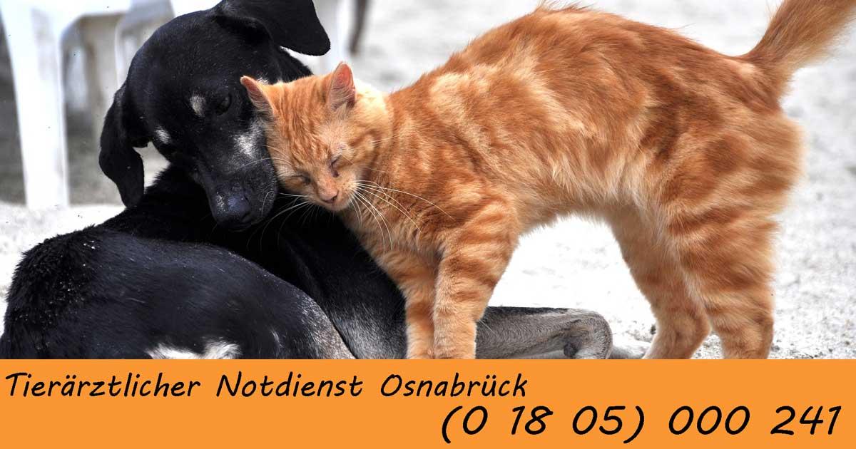 Tierärztlicher Notdienst in Osnabrück